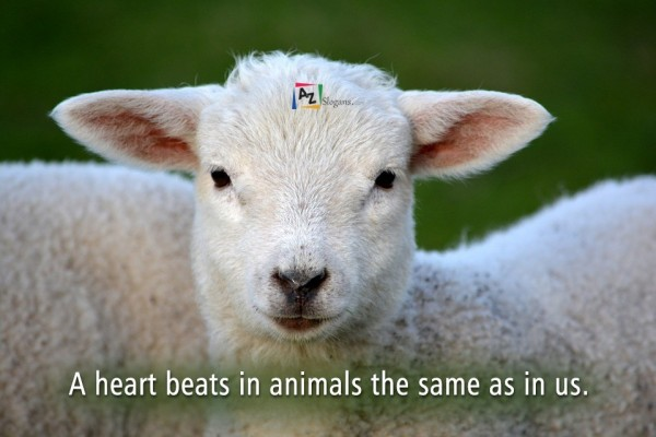 A heart beats in animals the same as in us