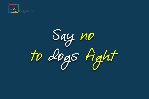 Say no to dogs fight