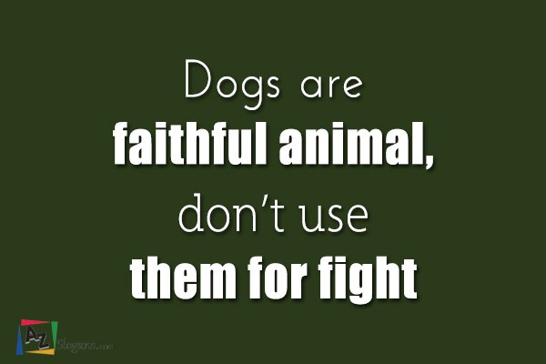 Dogs are faithful animal, don't use them for fight
