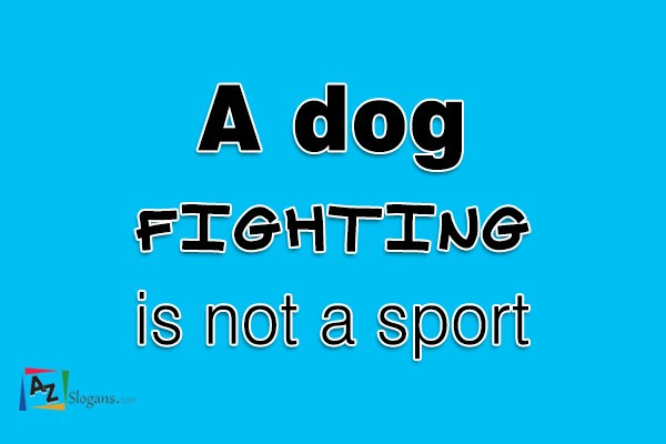 A dog fighting is not a sport