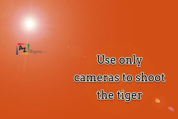 Use only cameras to shoot the tiger