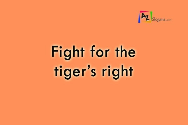 Fight for the tiger's right