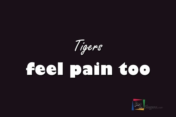 Tigers feel pain too