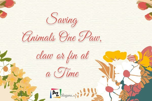 Saving Animals One Paw, claw or fin at A Time
