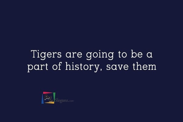 Tigers are going to be a part of history, save them