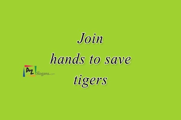Join hands to save tigers