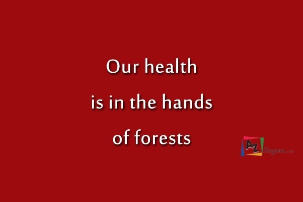Our health is in the hands of forests