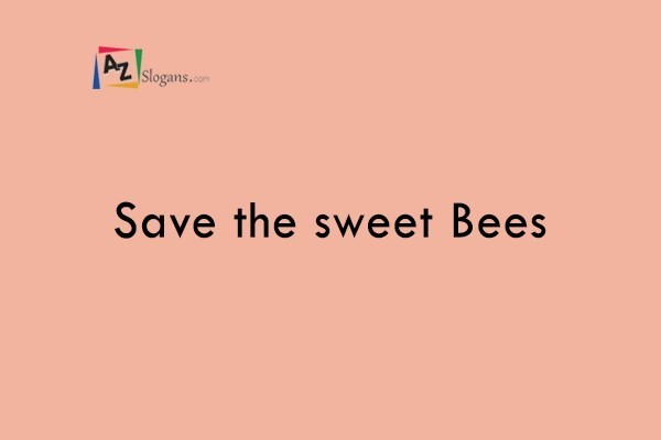 Save the sweet Bees