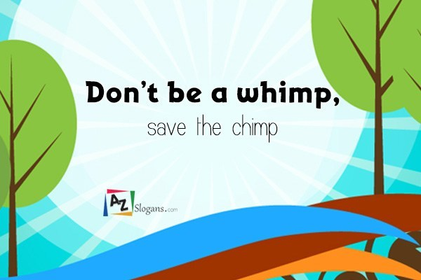 Don't be a whimp, save the chimp