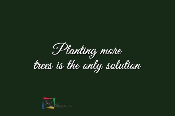 Planting more trees is the only solution