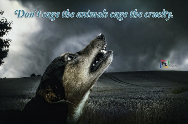 Don't cage the animals cage the cruelty.