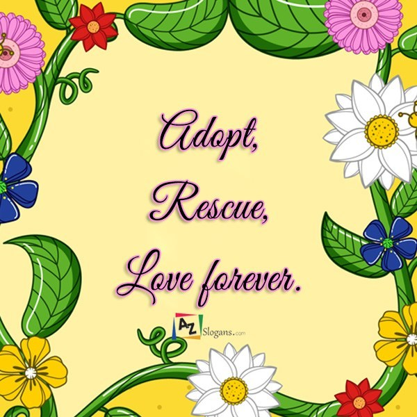 Adopt, Rescue, Love forever.