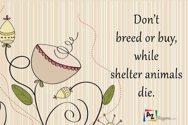 Don't breed or buy, while shelter animals die.