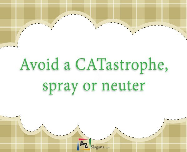 Avoid a CATastrophe, spray or neuter
