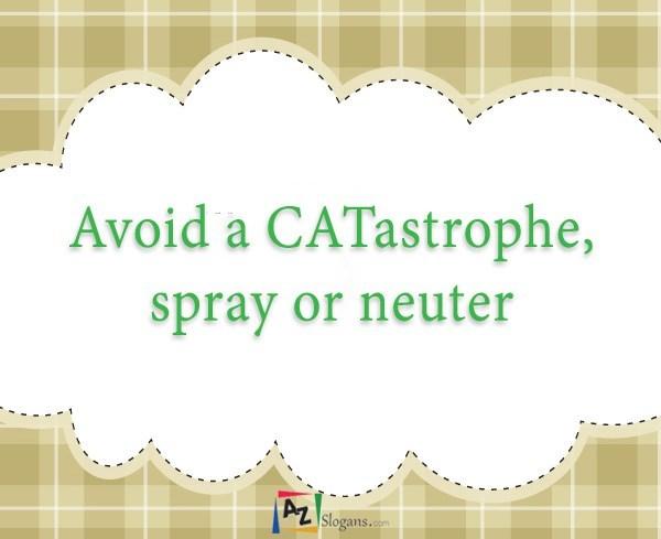 Avoid a CATastrophe, spray or neuter