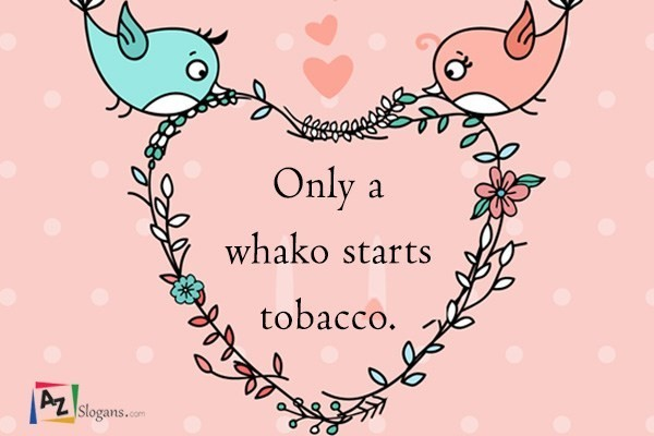 Only a whako starts tobacco.