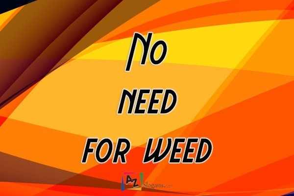 No need for weed